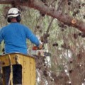 טיפוח עצים ונוף