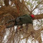 גיזום עצים - בטיחות בעבודה