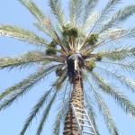 גיזום עצים גבוהים במיוחד