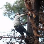 מעוז גיזום - גיזום עצים ושיחים