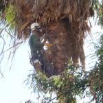 מעוז גיזום - גיזום עצים וטיפוח הסביבה